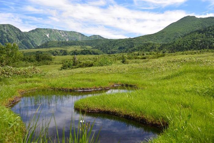 弥陀ヶ原では、至る所に池塘(ちとう)呼ばれる小さな沼池がぽっかりと空いており、独特の景観美をつくり出しています。