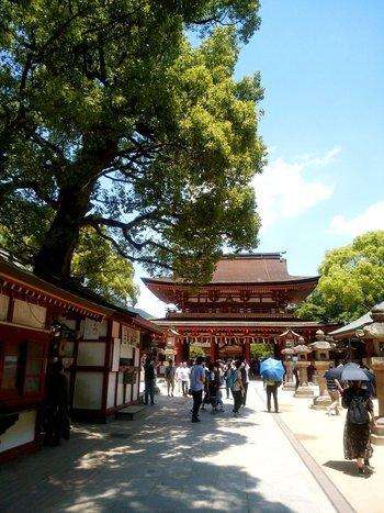 太宰府天満宮や熊本城などの歴史的建造物、桜島や阿蘇山などの大自然と訪れてみたい所が、九州にはたくさんありますね。博多ラーメンの長崎ちゃんぽん、鹿児島の黒豚にしろくま…食べておきたい物も色々あります。