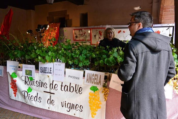 コルマールがあるアルザス地方は世界的にも有名なワインの産地でもあります。ワインとなるブドウの苗木販売所も町でよく見かけます。さすが本場!