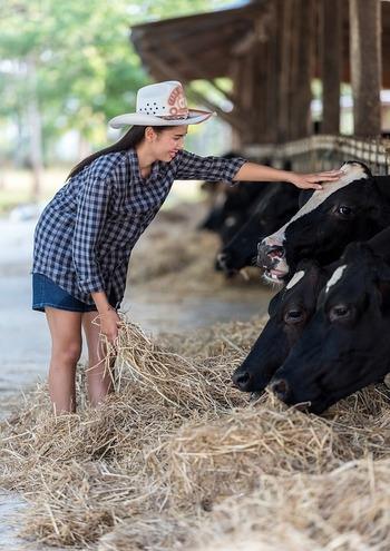 牧場では、さまざまな体験教室が開催されていて、自分で牛のお乳を搾ってみたり、バターや即席アイスクリームを作ったりすることもできます。私たちの口に入る加工品もこうやって多くの「いのち」と繋がっていることが感じられる体験ができますよ。