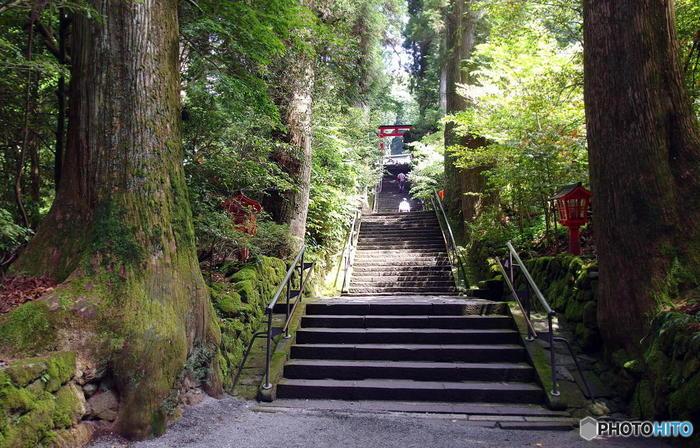 「元箱根港」まで来たのなら、芦ノ湖に突き出た赤い鳥居(平和の鳥居)が印象的な「箱根神社」へ参りましょう。海賊船の元箱根港からなら、第三鳥居まで徒歩で10分(芦ノ湖遊覧船の元箱根港からなら徒歩で4分)で到着できます。 【画像は、本殿へと続く正参道。老杉に囲まれた石段は、全部で90段。】