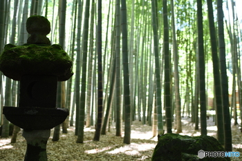 報国寺は鎌倉駅東口から鶴岡八幡宮方面へ歩き、そのまま金沢街道をすたすた歩く、約40分のお散歩コース。