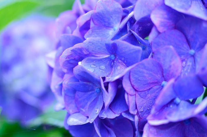 紫陽花が綺麗な6月は天候が変わりやすくちょっぴり気分も憂鬱になりがちですが、夏に向かって続々とおいしい食材が出始めてきている嬉しいシーズンです。