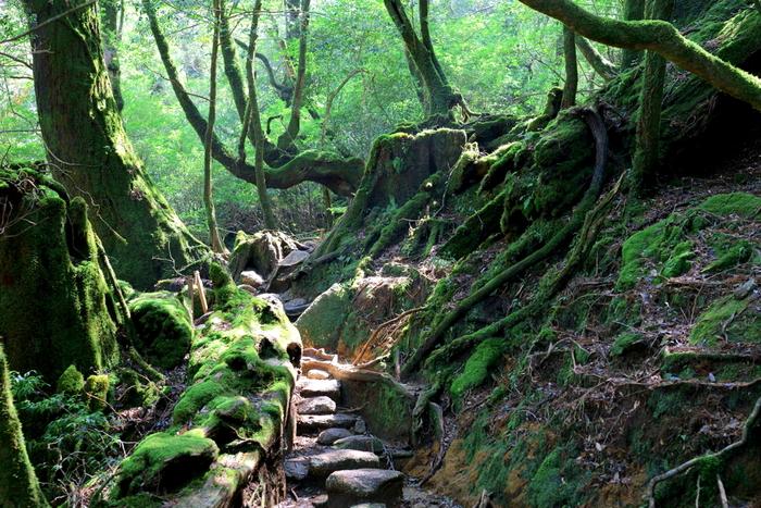 鹿児島港からフェリーで4時間。屋久島にある「白谷雲水峡」は別名「もののけの森」と言われている、苔で覆われた神秘的な森です。映画『もののけ姫』のモデルになったことから、そう呼ばれるようになりました。