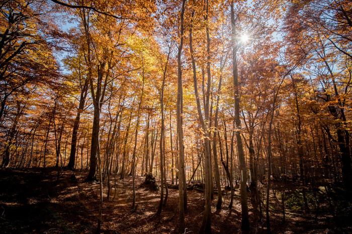 白神山地に広がるブナの原生林。その広さは東アジアでも最大級の面積。日本で最初に自然遺産に登録されたというのもうなずけます。
