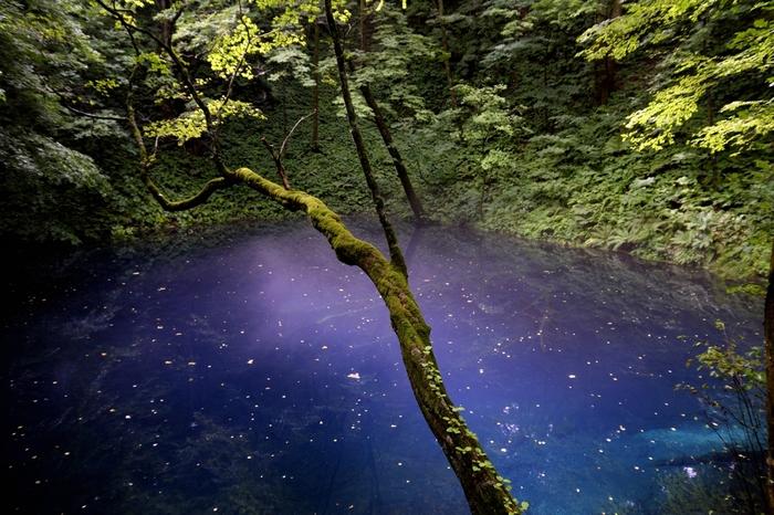 幻想的なブルーの湖「十二湖(じゅうにこ)」。青森県側にある、ブナ林に囲まれた33の湖沼群です。どうしてこのように透明度の高い青色になるのかは、未だ科学的に解明されていないそうです。まるで魔法のようですね。