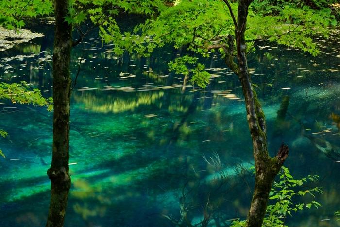 十二湖のひとつ「沸壺の池」の底から湧き出る水は名水としても有名。「長寿の水」として親しまれています。