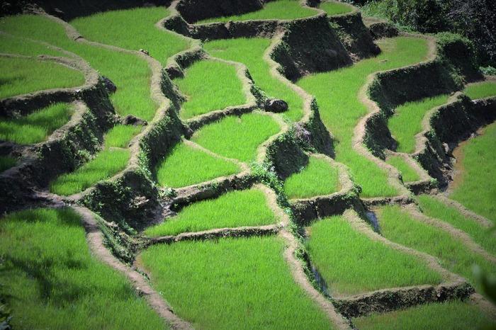 私たちの食事に欠かせないお米は、田植えから収穫までものすごい時間と労力がかけられています。どれほどの手間がかかって作られているのかを実際に体験してみるのもいいかもしれません。