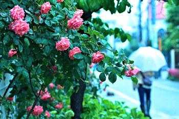 いつもならグズグズお家の中で過ごしてしまう梅雨。 そんな雨の日にこそ気楽に出かけて気分転換してみましょう。水琴窟の音色と雨音の優しい旋律が梅雨の鬱陶しさを軽くしてくれるはずです。