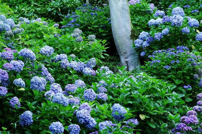 """水琴窟(すいきんくつ)の音色を楽しむお散歩の醍醐味とは?古都""""鎌倉""""では、桜や紫陽花(あじさい)の花々、秋の紅葉など、その時々の季節が織りなす景色とともに水琴窟の音色を楽しむことができます。"""