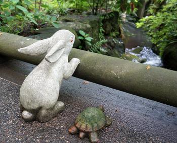 明月院の入り口付近には、こんなに可愛らしいうさぎと亀の石像もあります。なかよくせせらぎを眺めていて今にも動き出しそうです。