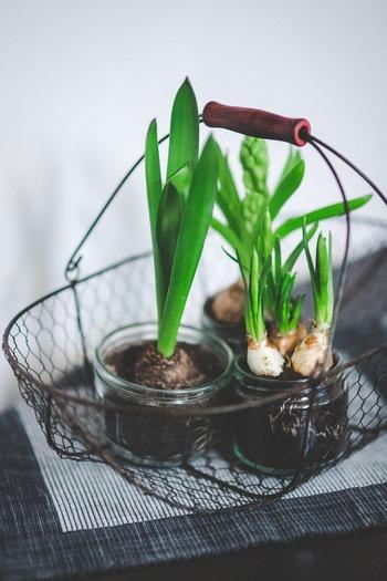 それとは逆に、カゴや木の箱に観葉植物を集めて部屋の一角に置くのもまた違った可愛らしさが出ておすすめです。