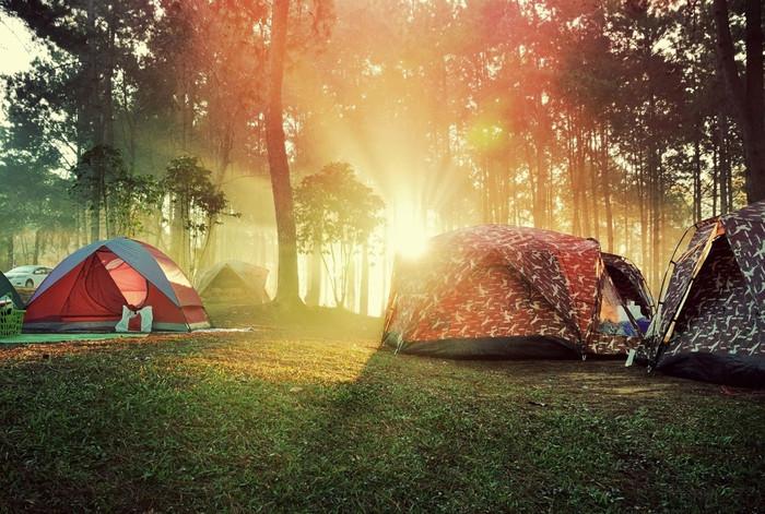 キャンプをするのは、その敷地である森の中。国立公園の中で一夜を過ごすなんて、なかなか出来ない体験ですよね。