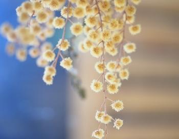 季節折々、その時々の鮮やかな花の一瞬の美しさを、永遠に楽しめるドライフラワー。瑞々しい生花とは趣が異なりますが、それがまた違った魅力でインテリアとしても人気ですね。