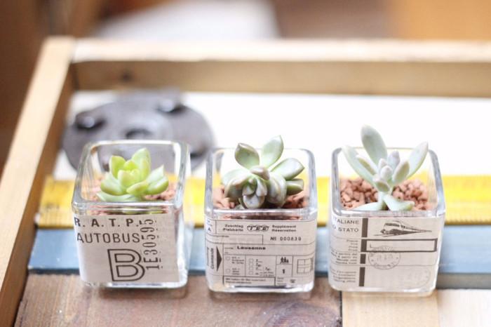 小さな観葉植物を横並びに置くだけでも可愛らしい雰囲気が出ます。こちらはセリアのガラスの器にセリアのアンティーク新聞をペタリと飾ったもの。
