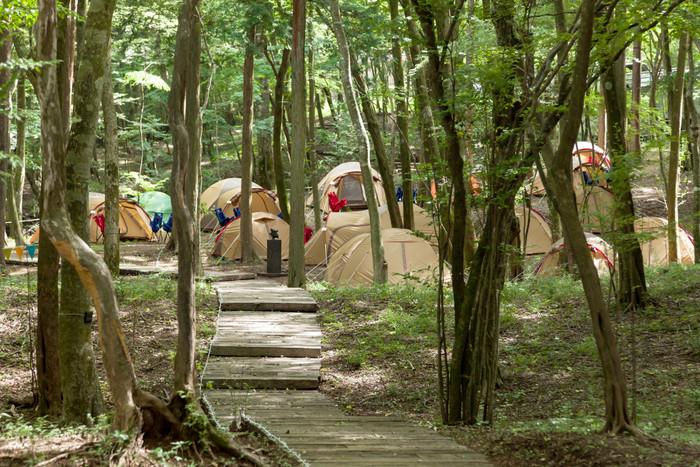 東京から約1時間半で訪れることができる富士箱根伊豆国立公園。その箱根地域には、ヒメシャラなどの落葉広葉樹を主とする自然林が大切に残されています。木々が風にそよぐ音に耳を傾けながら眠りにつく、そんな素敵な夜を過ごしてみませんか。