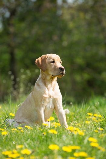 おすすめは、太陽の下や、強すぎない自然光が差し込む場所。猫であれば窓際にいる時、犬であれば散歩で外に出るときなどがいいですね。