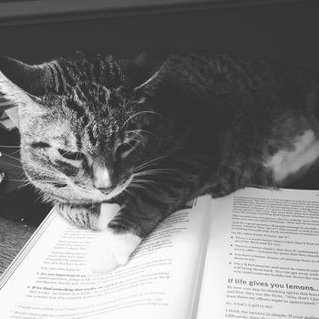 こちらは、読書を邪魔しにきたにゃんこでしょうか。本と猫が同じくらいの大きさで写真の中におさまっていることや、猫の視線もあってまるで本を読んでいるかのように見えてかわいいですね。