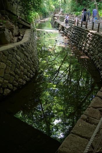 水面に映る木々の緑が涼やかです。 渓谷の中に入ると、気温も外より数度下がるそうですよ。