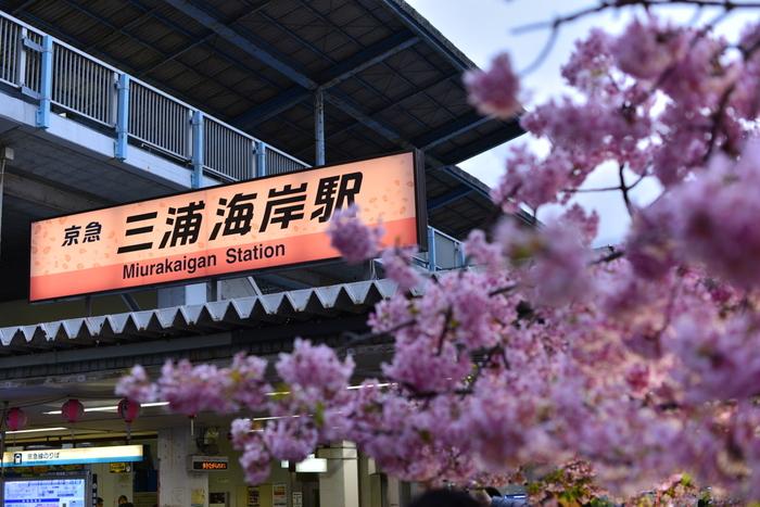 京浜急行「三浦海岸駅」から、バスの剣崎行きに乗って「菊名」で降ります。歩く場合は、三浦海岸駅から海沿いを三崎口方面へ歩いて20分くらいです。夏は日差し対策を万全にしてくださいね。