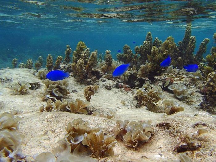 抜群の透明度を誇る瀬底ビーチはシュノーケルスポットとしても人気があります。色鮮やかな魚たちが優雅に泳ぎまわる瀬底ビーチの海中は、まるで竜宮城のようです。