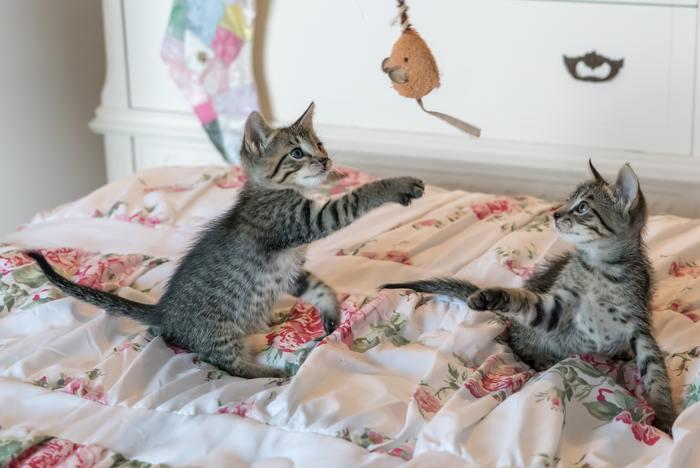 初めての物事や知らない出来事に遭遇したとき、人間はちょっぴり躊躇したり、面倒に感じて近寄らないことも多いと思うのですが、猫たちは逆に新しいモノが大好きです。何事にも興味を持って観察したり、少しづつ歩み寄って安全かどうか確認したりします。「これは大丈夫!安心だ!」と一度認識したら、どんなことにも好奇心を持って、楽しく接してしまうのです。