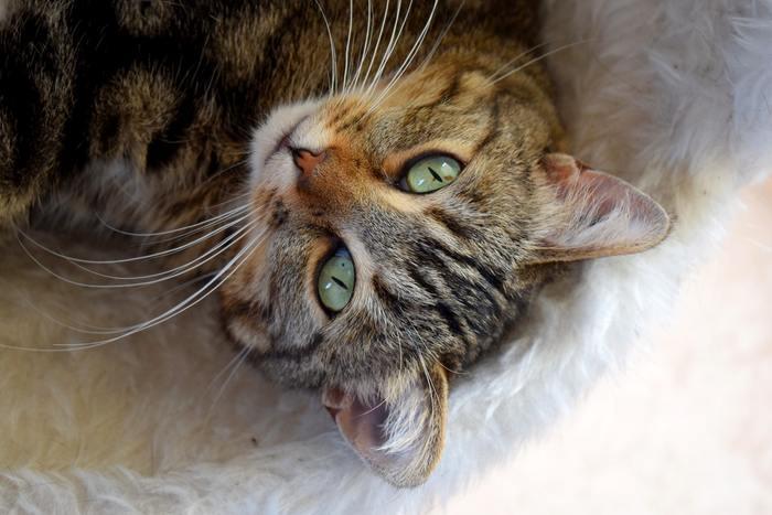 私たちが元気のないときには、何かを察知したように傍に寄り添ってくれる猫たち。おかげで、心がふんわり軽くなることも。その猫たちの習性は、自分が幸せになるためのコツを本能的に知っているかのようです。猫のコミュニケーションの取り方や生活習慣から幸せに生きるためのコツを教わってみませんか?