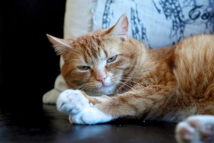 私たちを取り巻く環境は多様で、何か一点に集中することが難しく感じられることも。食事中にメールやSNSのチェック、またメディアからは次々と最新情報が流れていたり...。いつも何か他のことに気を取られてしまいがちです。でも、猫たちはいつも余計な事はせずに、シンプルに一つのことに集中しているようにみえませんか。