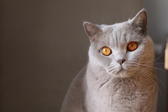 猫たちの生態から様々な生き方のコツをご紹介しました。いかがだったでしょうか? 猫たちは他者に頼りすぎず、自分にとっての幸せを最優先に考えて行動しているように見えます。と言っても、自分勝手に自由に振舞うということではありません。私たちが猫を見てホッと心が和むように、きっとあなたが幸せそうだと周りの人たちにも、良い影響を与えることになりますよ。