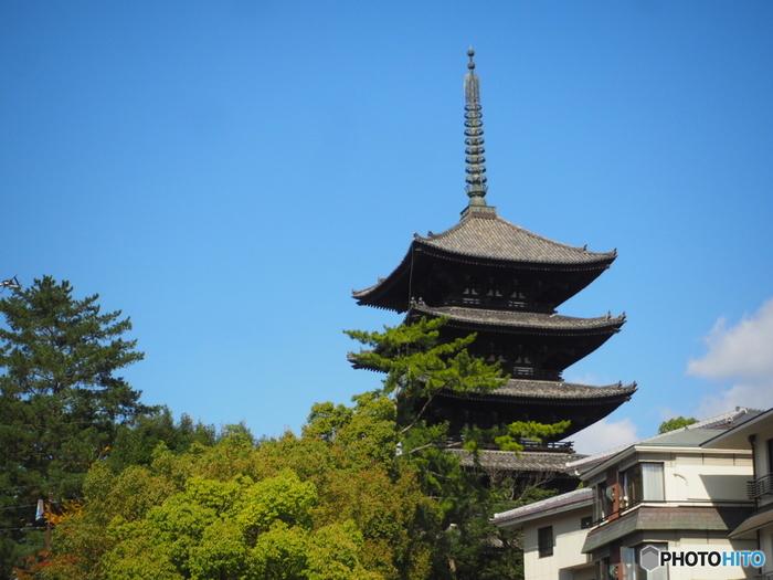 現在の地に移転、そして「興福寺」と名付けられたのが、藤原京から平城京へ都が移った710年のこと。奈良時代初期頃には、四大寺のひとつとして、繁栄していたと伝えられています。室町時代に再建された「五重塔」や、鎌倉時代に再建された「北円堂」が国宝に選定されているほか、重要文化財も目白押し!
