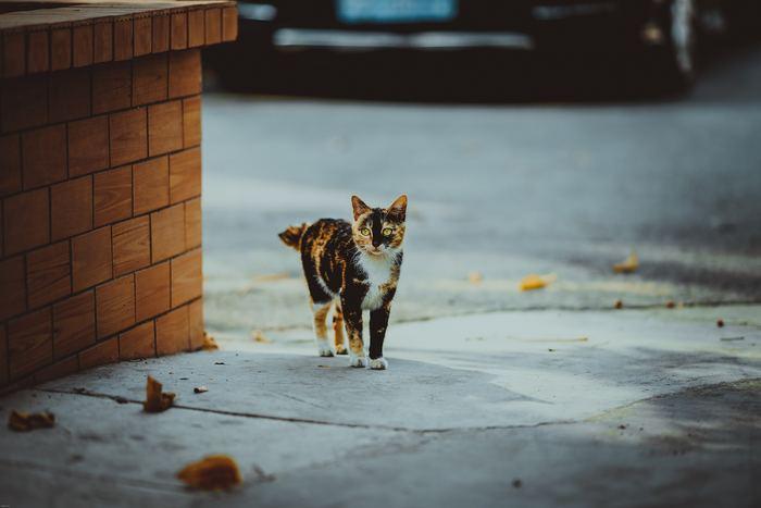 猫たちは群れで行動するよりも単独行動を好む動物です。とても独立心が強いので、何にも忖度や依存することが無いように感じます。