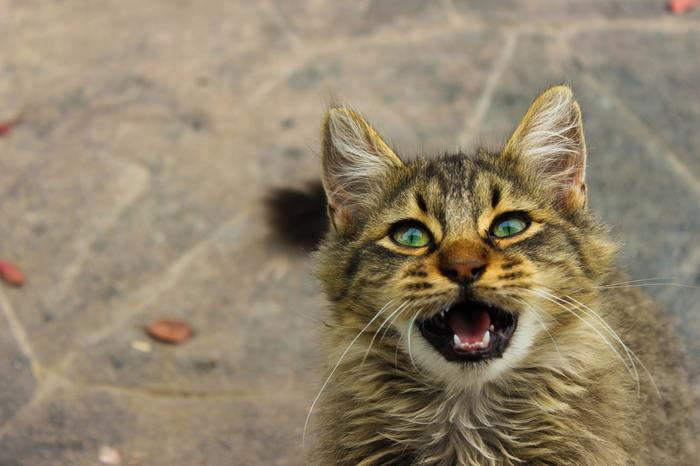 猫は嫌なことをされたら、はっきり「イヤ」と鳴き声や態度で示します。 猫の好みはさまざまですが、一定の時間、自由を拘束されるブラッシングや爪切り、シャンプーを嫌がる猫は多いですよね。また好んでいないひとに触られたり、追いかけられたりすると「シャーッ」と威嚇をすることも。