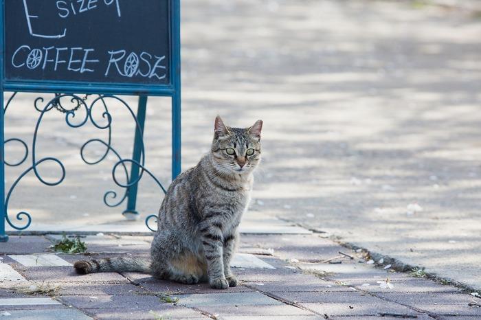 猫たちは自分の家が大好きです。いちばん心が安らいで落ち着ける場所だから。そんな猫たちも、一日に一度は安住の地から少し離れて、自分のテリトリーにしている地域をパトロールします。そこでは、新しい刺激をもらったり、遊んだり、冒険したり、寛いだり。