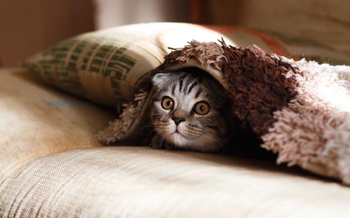 一見、のんびり屋さんで一日の大半を眠っている猫たちですが、いざというときには活動的に。  野生の猫たちはハンターの名手だそうですが、家猫たちもまた遊び上手で、楽しいことの見つけ上手でもありますよね。気になるものを見つけたときのクルクルと動く目を見ると、私たちも彼らを少し見習って、何事にも果敢にチャレンジしなければと思ったり。
