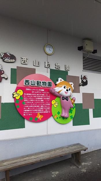 西山動物園は全国で最も小さい動物園。ですがレッサーパンダの繁殖数で日本一を誇り、その愛らしい姿を見るために全国から大勢のファンが訪れます。