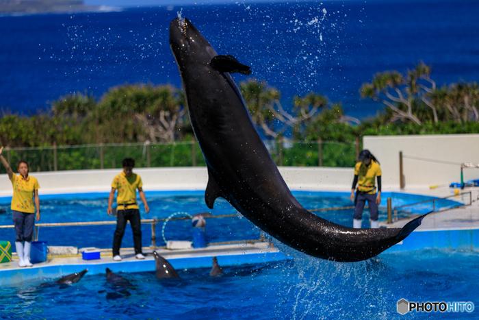 さらに、イルカショーが行われる「オキちゃん劇場」も無料!美しい海をバックに繰り広げられるダイナミックなジャンプは一見の価値アリです。