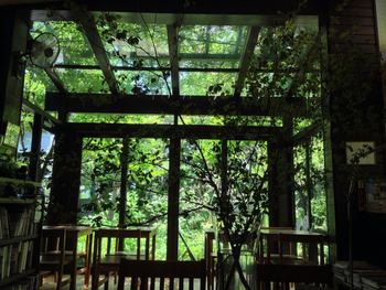 都会ではなかなか味わうことのできないグリーンの多さに圧巻です。天窓から射し込む光がなんとも心地良い。