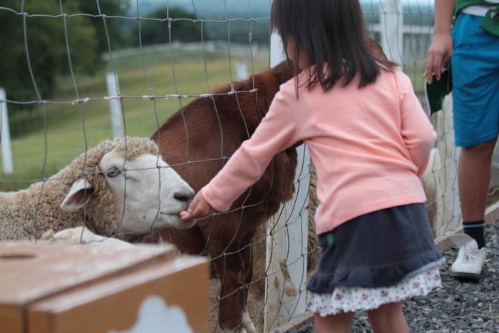 大人しい動物たちに餌付けできたりするから、小さな子供でも楽しむことができますよ。