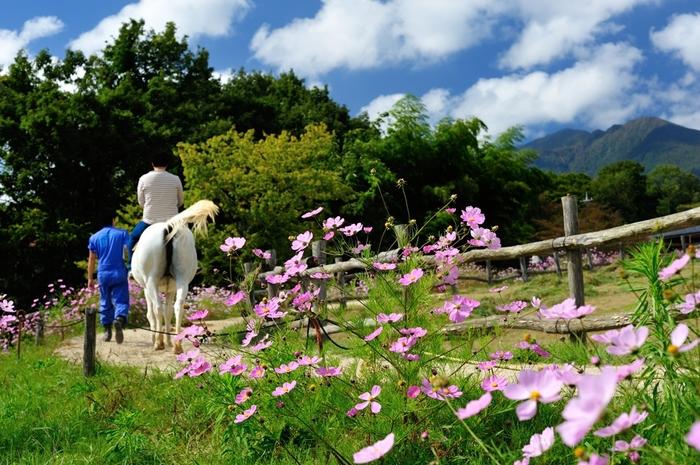 那須の自然を感じながらの乗馬体験は、気分もリフレッシュできて気持ちよさそう。いつもとは違う体験が待っています。