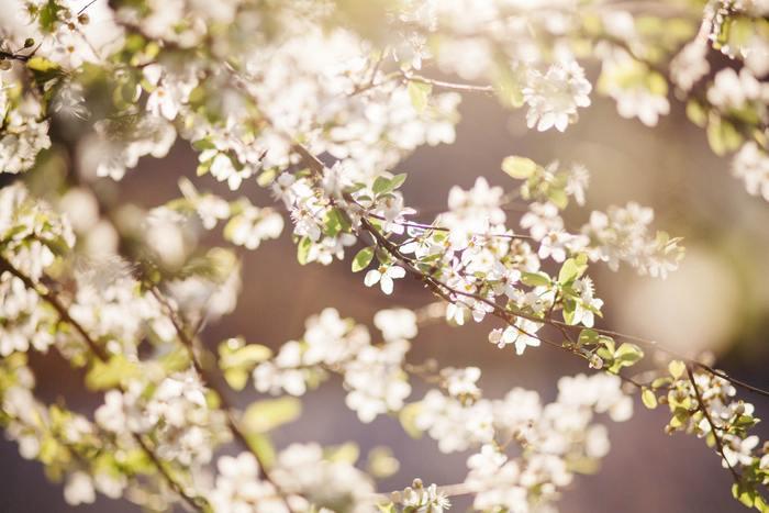 ホッピーが純粋に恋をして奮闘している姿は、微笑ましくほっこりとします♪恋をするのに年齢は関係ないと思わせてくれる、キュートでほのぼのとした空気感のある作品です。