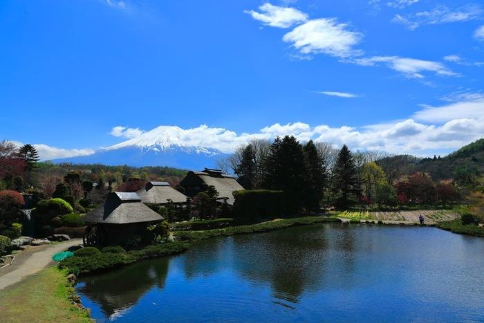 河口湖から車で30分ほどのところにある「忍野八海(オシノハッカイ)」は、富士山の伏流水に水源を発する湧水池です。水底まで透けて見える池は神秘的で、一度は訪れる価値のあるスポットのひとつ。