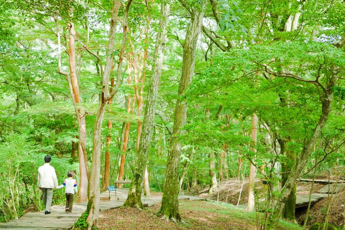ポーラ美術館は富士箱根伊豆国立公園の中にあって、野鳥たちのさえずりや、時おり姿を見せる動物を楽しむこともできる、自然と一体になった空間です。