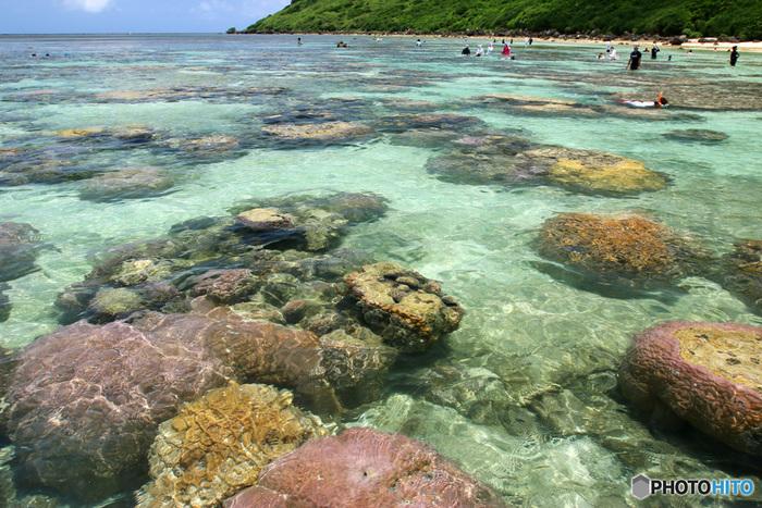 抜群の透明度を誇る海の中は、カラフルなサンゴの宝庫となっています。ここでは、テーブルサンゴや円形のサンゴだけでなく、枝サンゴなど様々な種類のサンゴを見かけることができます。