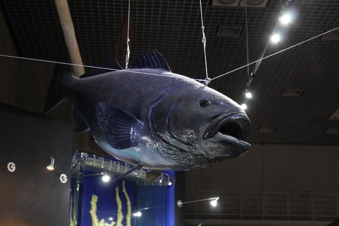 地球館では、地球の環境や自然についての展示や科学技術の紹介、特別展示などが開催されています。私たちが住む地球、そして日本について、知らなかったことをたくさん知ることができますよ。