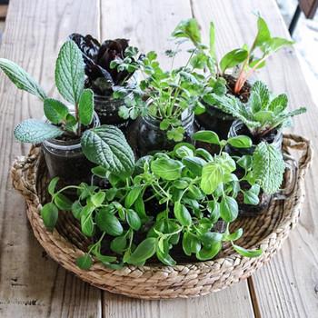 ちいさな鉢に植えたハーブを大きなバスケットにまとめると、寄せ植えのような雰囲気に。ひと鉢ずつ管理することができるので、初心者さんにもおすすめです。