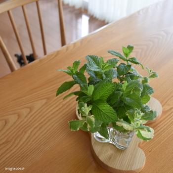 お料理の盛りつけの仕上げにちょっぴりハーブをアレンジしたいときに、自家栽培をしていれば気軽にひと枝だけ摘み取ることができますね。