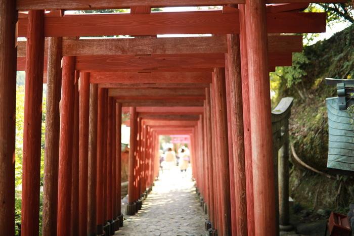 本殿から奥の院へ向かう参道には「赤鳥居」が連なっています。なぜ赤色かというと、昔は春の暖かな陽気や明るい陽気を招いてくれるとされていたからだそう。なんとも神聖な空気が感じられます。