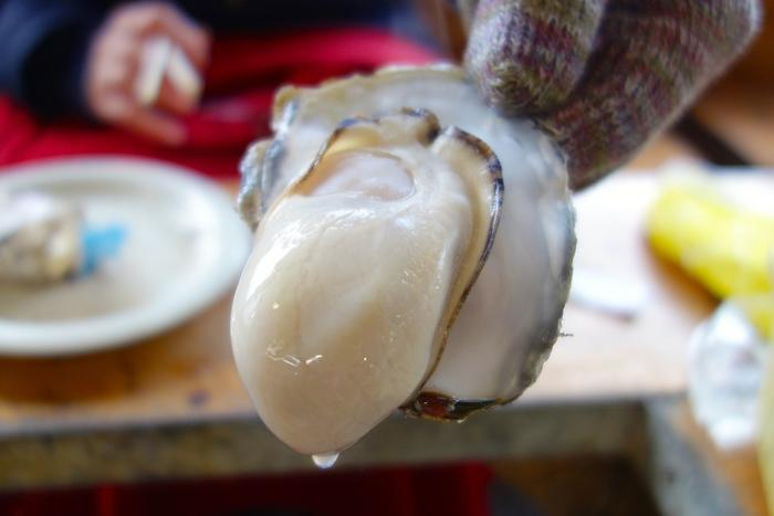 こちらの牡蠣は大きくプリッとジューシー!口に入れるとミルキーで濃厚な味わいが口の中にじゅわっと広がります。牡蠣は冬~春のイメージがありますが、夏は岩牡蠣、冬は竹崎牡蠣など、一年を通して美味しい牡蠣を堪能することができます♪