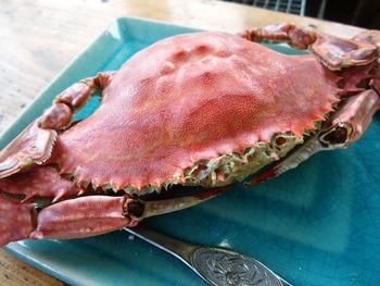 太良を訪れたら「竹崎かに」も食べておきたいですね!夏~秋は雄蟹、冬~春は雌蟹を食べることができます。季節それぞれの美味しさがあるので、ぜひ味わってみてください。