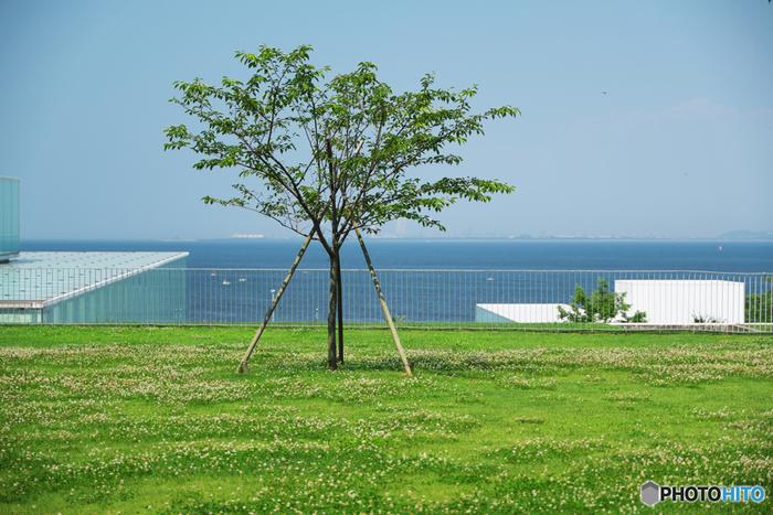 作品を見るだけではないのが、この美術館のすごいところ!横須賀の海を堪能することができるのです。美術館の屋上は海の展望台となっており、船の行き交う様子が見られることも。また、この屋上から森に面している「山の広場」へと行くことができ、森林浴も楽しめますよ。